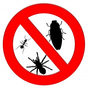 9 Tips to Protect Your Home and Family from Pests